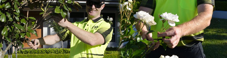Hedging & Pruning